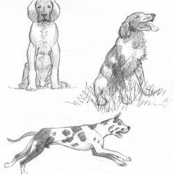 Croquis de chien