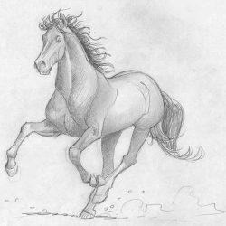 Étude de cheval