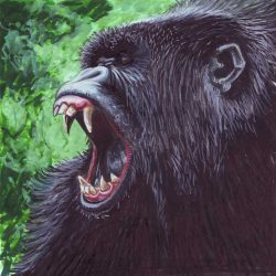 Croquis tête de gorille
