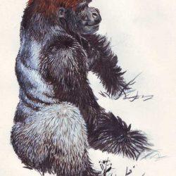 Croquis de gorille